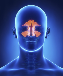 3D image showing effects of sinusitis